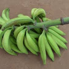 Unripe Plantain (Bunch – Medium (7-8 Kg))