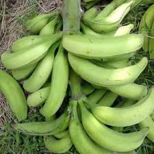 plantain ogun, large